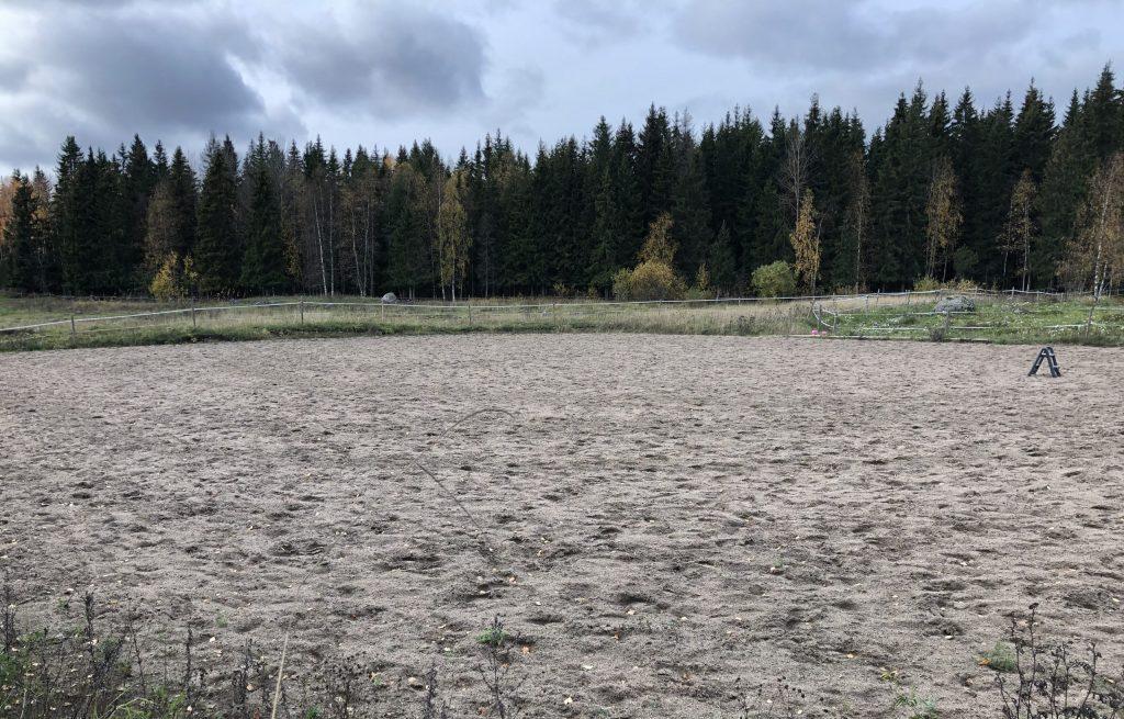 hiekkakentta ratsastusta varten takana metsaa